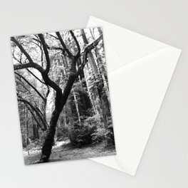 Hoh Rain Forest Impression Stationery Cards