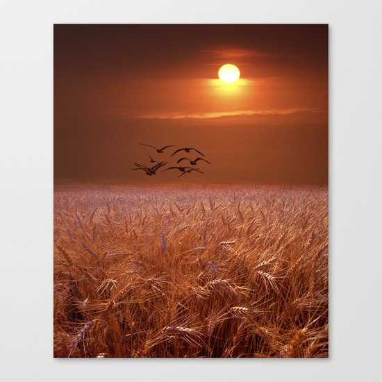 Gulls flying over a Wheat Field at Sunset Canvas Print