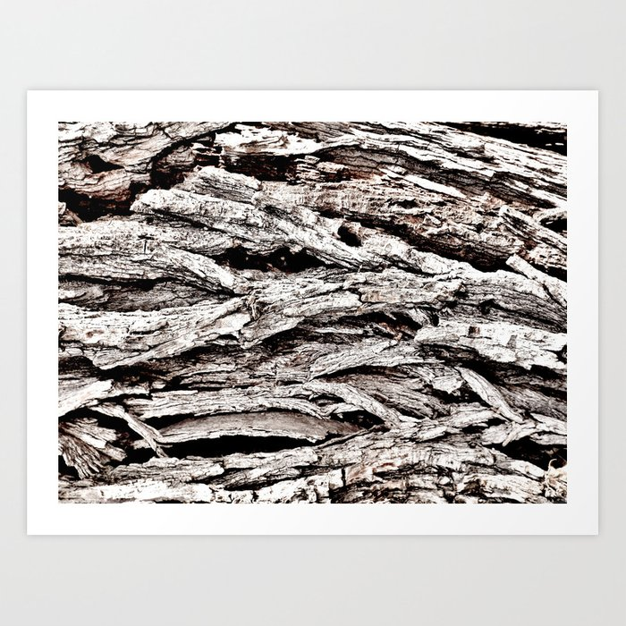 """Winter Bark"" Art Print"