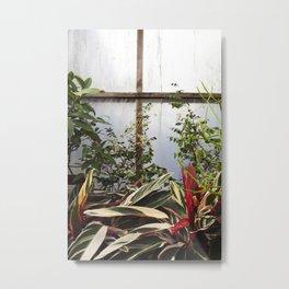 Greenhouse 009 Metal Print