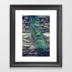 Peacock  Framed Art Print
