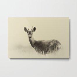 Vintage Roe Deer Metal Print