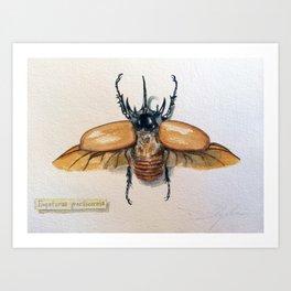 Eupatorus gracilicornis Art Print