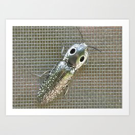 Click Beetle Art Print