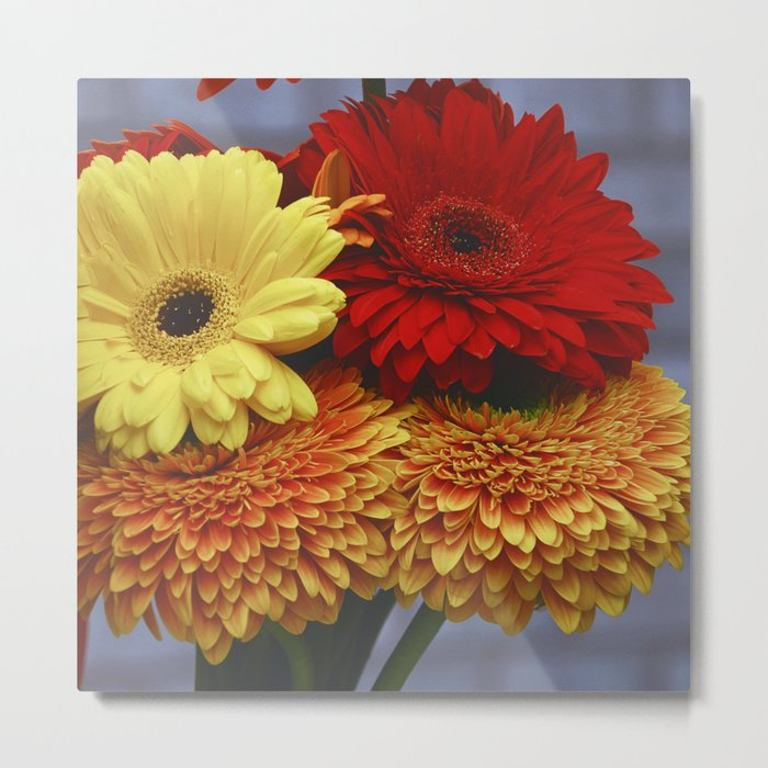 Colorful Germini Metal Print
