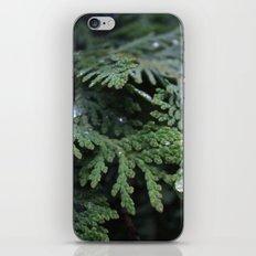Evergreen 2 iPhone & iPod Skin