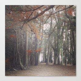 Light through the Cypress Canvas Print