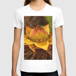 Musella Lasiocarpa - A Drawf Banana T-shirt