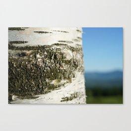 Birch Bark II Canvas Print