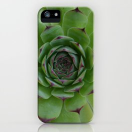 Houseleek (Sempervivum) Photo with purple tips viewed from the top dow iPhone Case