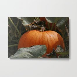 Perfect Pumpkin Metal Print