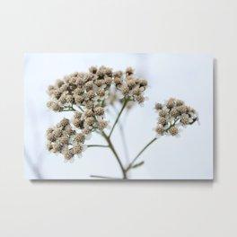 White on White Metal Print