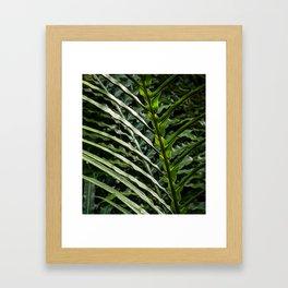Forest Floor Frond Framed Art Print