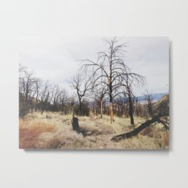 Tree Cemetery Metal Print