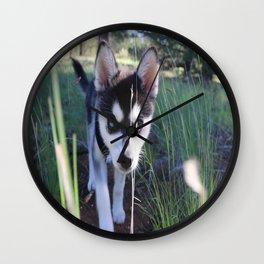 Koa On The Hunt Wall Clock