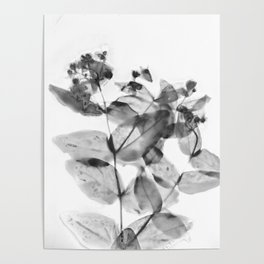 Ghostly Blooms Poster