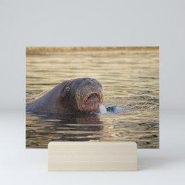 Walrus Mini Art Print