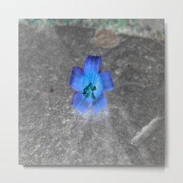 flower in blue Metal Print
