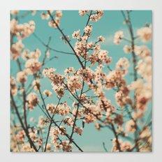 cherry blossom photograph. Cotton Candy Canvas Print