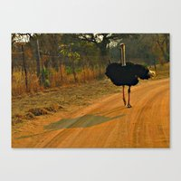 ostrich Canvas Prints featuring Ostrich by Ramsay