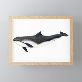 Harbour porpoise (Phocoena phocoena) Framed Mini Art Print