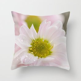 One Chrysanthemum flower with water drops closeup Throw Pillow