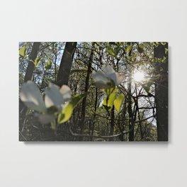 Breaking Light and Flower Metal Print