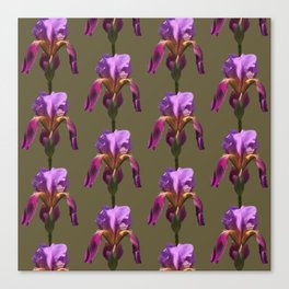 iris variations: khaki Canvas Print