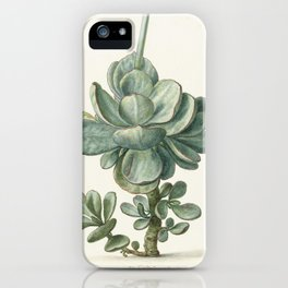 Herman Saftleven - Succulent (probably a Cotyledon orbiculata) - 1683 iPhone Case