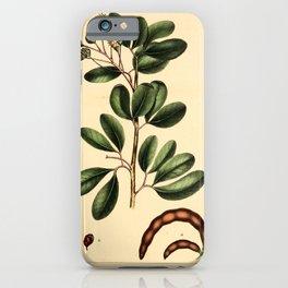 Guadaloupe Inga, inga guadalupenis Redoute Roses 3 iPhone Case