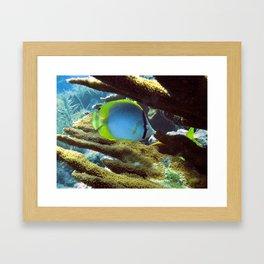 Spotfin Butterflyfish Framed Art Print