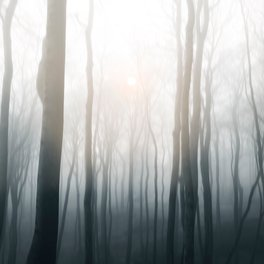 Art Print - Foggy morning - Viviana Gonzalez