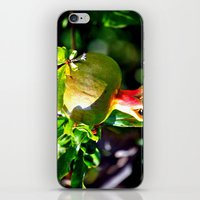 pomegranate iPhone & iPod Skins featuring pomegranate by  Agostino Lo Coco