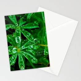 Clovers After A Fresh Rain Stationery Cards