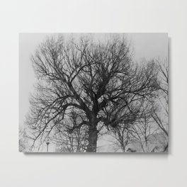Old tree. Moscow. Metal Print