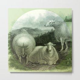 Sheep's Ass Metal Print