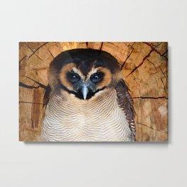 Asian wood Owl Metal Print