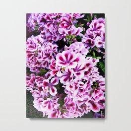 Martha Washington Geranium I Metal Print