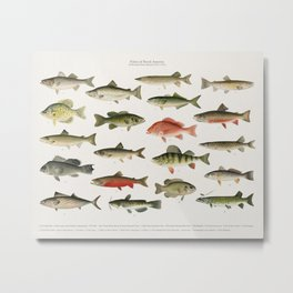 Illustrated Denton Fish Chart of Fishes of North America Metal Print