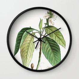 Malabar nut (Justicia adhatoda) from Traite des Arbres et Arbustes que lon cultive en France en plei Wall Clock