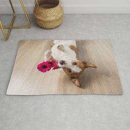 Jack Russell Terrier 6 Rug