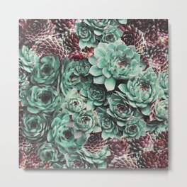Succulent Sempervivum Plants Metal Print