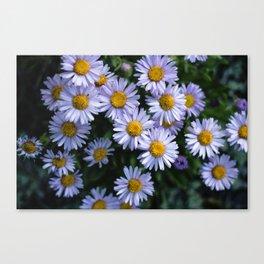 Plant Patterns - 𝘌𝘳𝘪𝘨𝘦𝘳𝘰𝘯 sp. Canvas Print