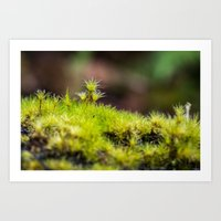 moss Art Prints featuring Moss. by Michelle McConnell