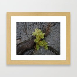 green glimpse Framed Art Print