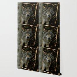 Timber Wolf Wallpaper