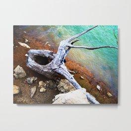 Lakeshore Driftwood Metal Print