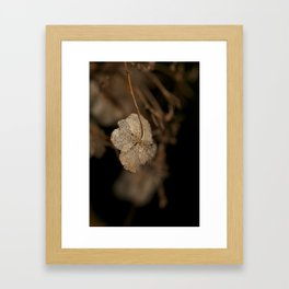 Withered leaf Framed Art Print