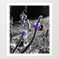 Purple Honey Art Print