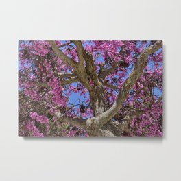 Love tree. Spring at the Alhambra Metal Print